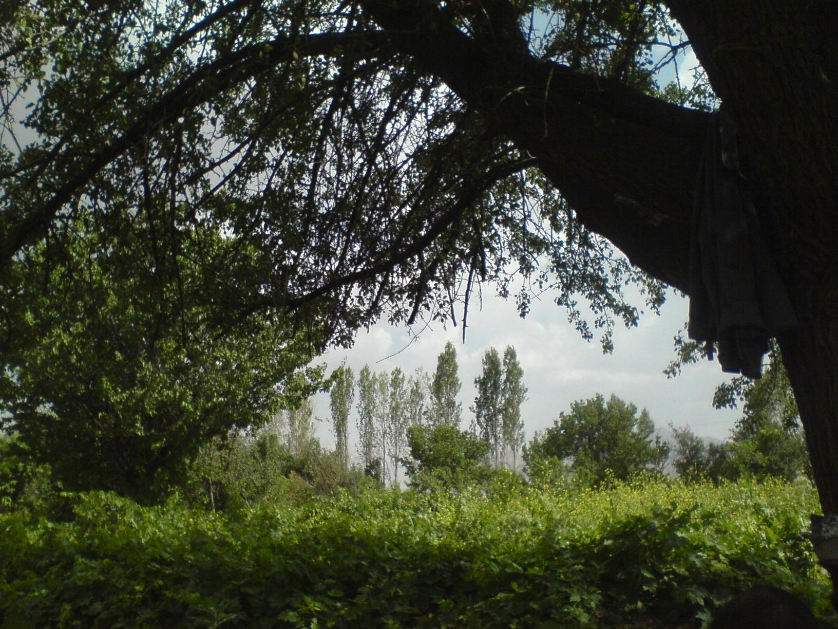 باغ های انگور روستای بان